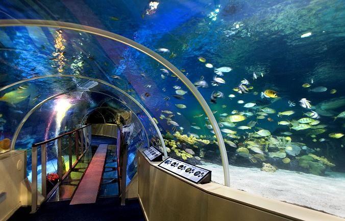 Inside National Sea Life Center
