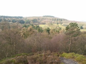 Lickey Hills Country Park, Birmingham- A Brush with theNature